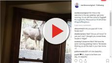 Sister Wives: Meri Brown gets delightful morning visit by a deer