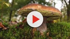Intossicazione da funghi: 10 regole del Bambino Gesù di Roma per prevenirle