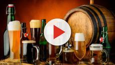 cultivo da cevada podem fazer com que o consumo da cerveja se torne mais caro