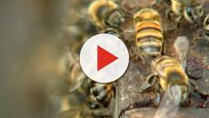 Ataque de abelhas fere 54 pessoas em Minas Gerais
