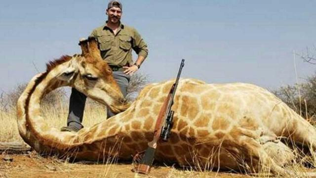 Idaho Fish & Game Commissioner resigns over African animal slaughter