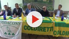 Cimici asiatiche invadono tutta Italia