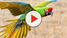 VÍDEO: 5 especies de aves extintas o cerca de desaparecer