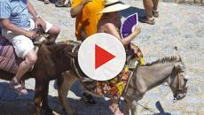 Jegues e mulas são prioridade em ilha famosa da Grécia