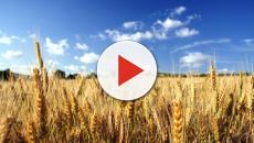L'Innalzamento del clima ridurrebbe la produzione della birra
