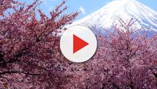 Tokyo: il bigliettaio di un parco fa entrare gratis i turisti causando un danno
