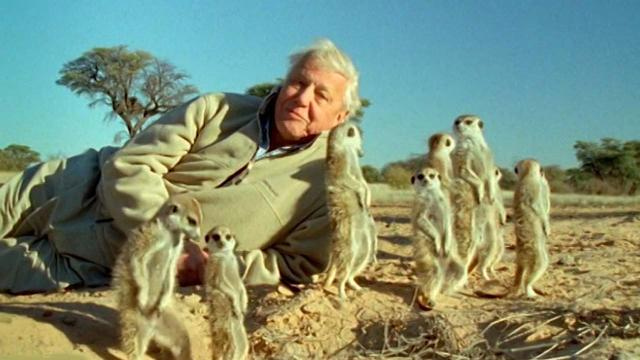 Our Planet: Netflix documentary with David Attenborough