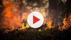 Incendi in California, in fuga anche le star