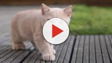 Algumas curiosidades sobre os gatos que você não sabe