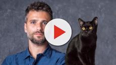 O Sétimo Guardião e a quebra do estigma do gato preto