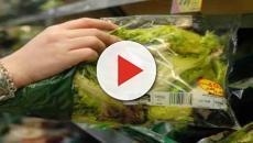 Superbatteri nelle insalate pronte in busta: lo dimostra uno studio tedesco