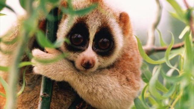 5 animaux mignons en apparence mais dangereux