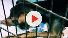 Sardegna, 76enne denunciato per maltrattamenti: lancia giù il cane del vicino