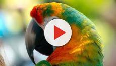 VIDEO:6 curiosidades sobre los loros