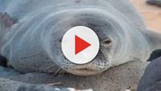 VÍDEO: 5 Especies de mamiferos europeos en peligro de extinción