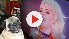 VIDEO: Los dueños de Noelio explican que su perro se hizo fan de OT