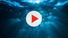 Oceano Pacifico, scoperto un ecosistema sconosciuto negli abissi
