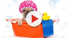 VÍDEO: Cinco recomendaciones para el cuidado de tu mascota canina