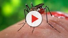 VÍDEO: Cinco mortales enfermedades tropicales