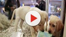 VIDEO:Se prohíbe la venta de cachorros de perros y gatos en Reino Unido
