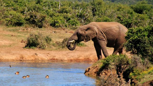 5 of the best locations for African safaris