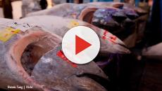 Tokyo, Japan: Bluefin tuna sells for over a million dollars on auction