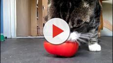 5 fatos curiosos a respeito da vida dos gatos