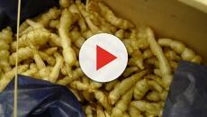 Les crosnes : des légumes de saison à redécouvrir