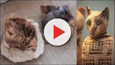 Descubren en Egipto momias de gatos de 6.000 años de antigüedad