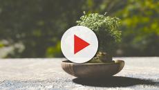 Dicas para cultivar melhor o seu Bonsai