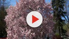 Árvores para plantar em ambientes urbanos