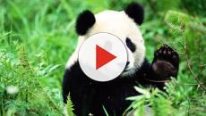 Estinzione animali, a rischio 600 specie in più del previsto