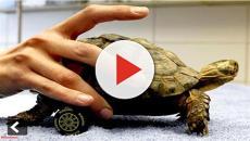 Animais que usam prótese para viver normalmente