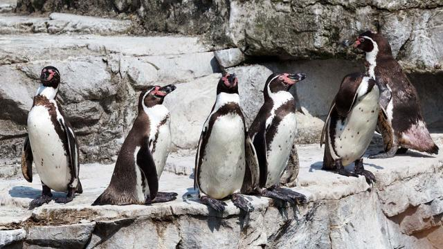 Two penguins stolen from Nottingham zoo have been returned