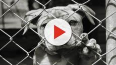 Verona: Maltrattamento di animali, scattati i sequestri