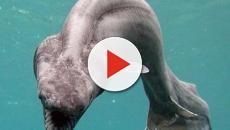 Scoperto nuovo squalo preistorico tra i resti di un Tirannosaurus Rex