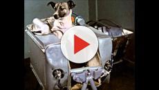 A história de Laika, o primeiro animal a viajar para o espaço