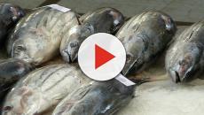 Veneto: Divieto di consumare il pesce causa inquinamento Pfas