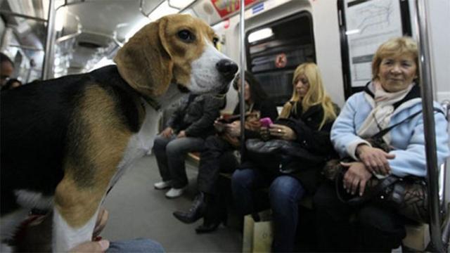 Cachorros poderão andar nos ônibus e metrôs de São Paulo