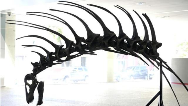 Scoperta in Patagonia una nuova specie di dinosauro