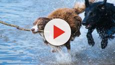 El mal aprendizaje que reciben los perros influye en su conducta
