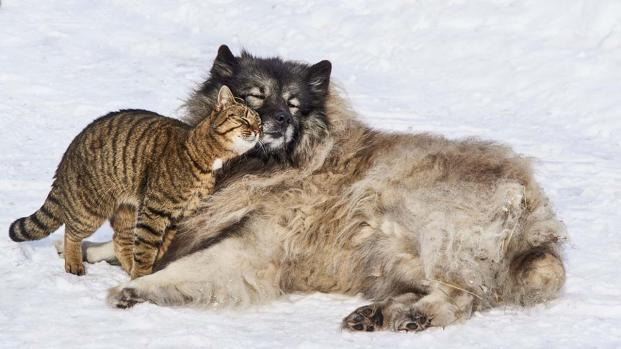 5 heart-warming inter-species animal stories that teach us a lesson