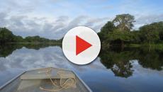 El Gobierno de Brasil vende tierra del Amazonas