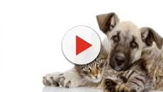 La primera cafetería para que puedan adoptar perros en Madrid