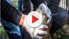 Zoo di Gaza, rimossi gli artigli ad una leonessa per far giocare i bimbi