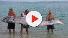 Peixe de 11 metros aparece no mar do Japão