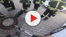 Germania, topo troppo grasso rimane bloccato in un tombino: salvato dai Vigili del Fuoco
