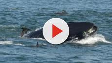 El hombre que fue escupido por una ballena destaca la importancia del instinto