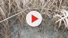 Hace siglos que la contaminación de las aguas es un problema en la Vega de Antequera