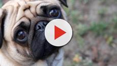 En Alemania incautan un perro para saldar una deuda